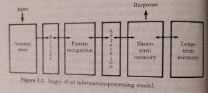 Stages of an information processing model fr. Cognition 1982